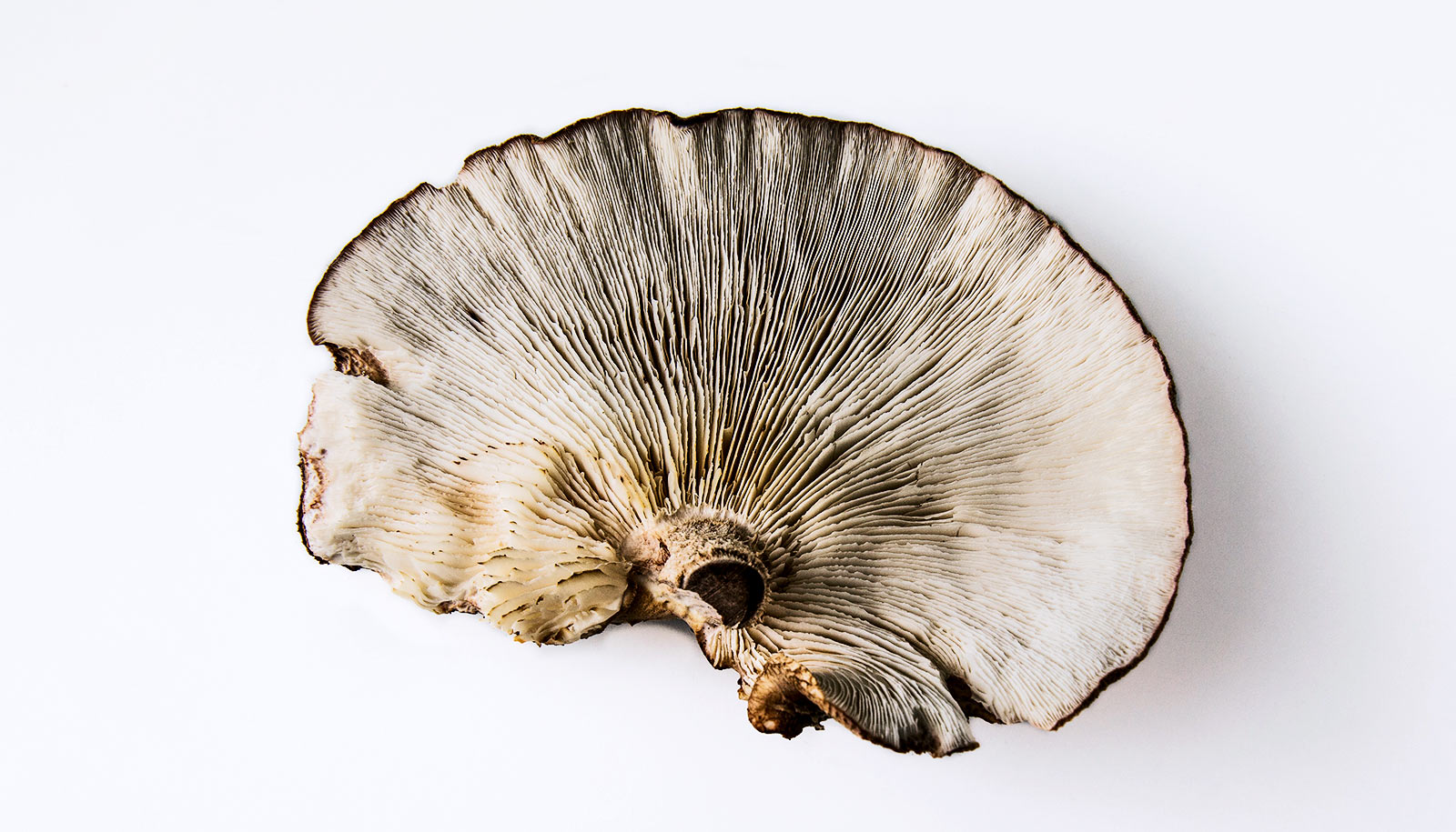 The Brain and The Mushroom appear to be a mirror onto life itself